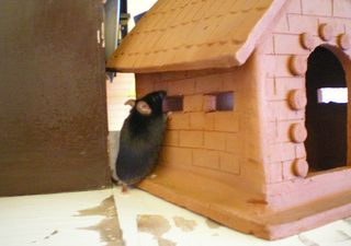 Bigotes Investigates His New Digs