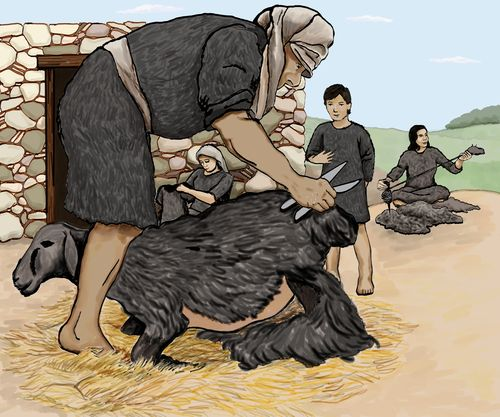 Sackcloth Shearing